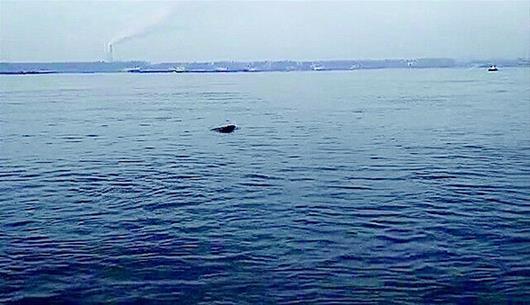 黄冈长江段现戏水江豚群:最大一头约有1.5米长