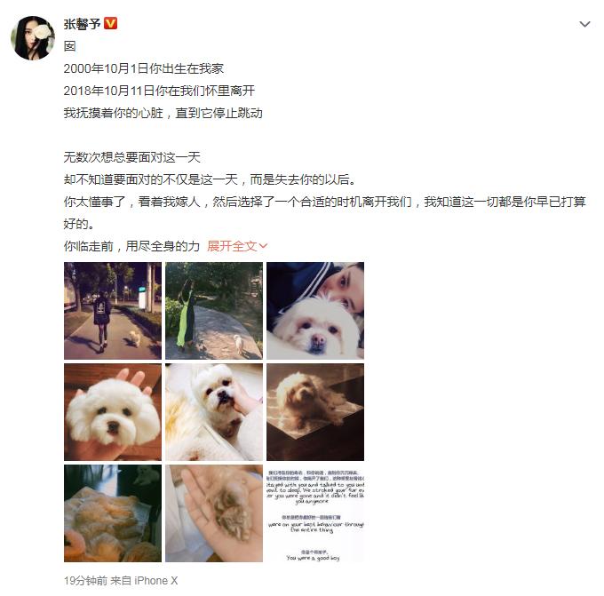 张馨予发文悼念去世爱犬