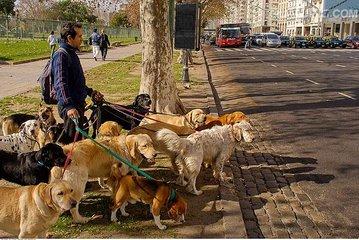 """最严遛狗规定 戏称""""史上最严城市养犬办法"""""""