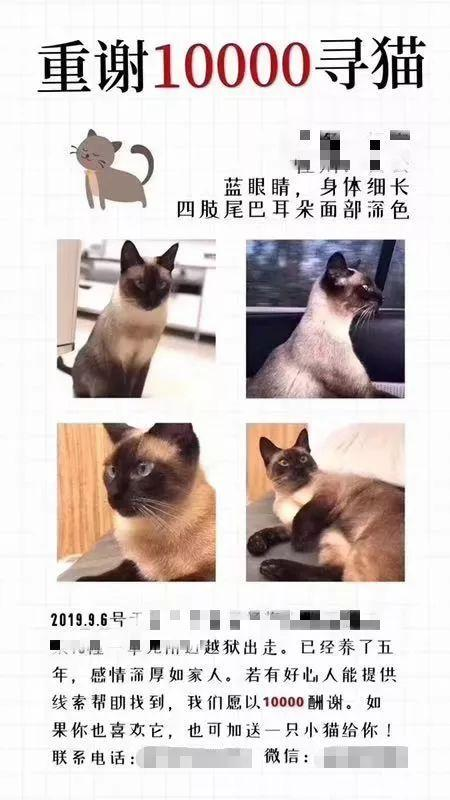 """杭州万元寻猫引热议 """"悬赏寻猫""""大戏让社会诚信缺失变得更加严重"""